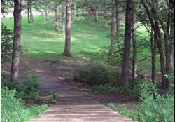 Park pathway into wooded area